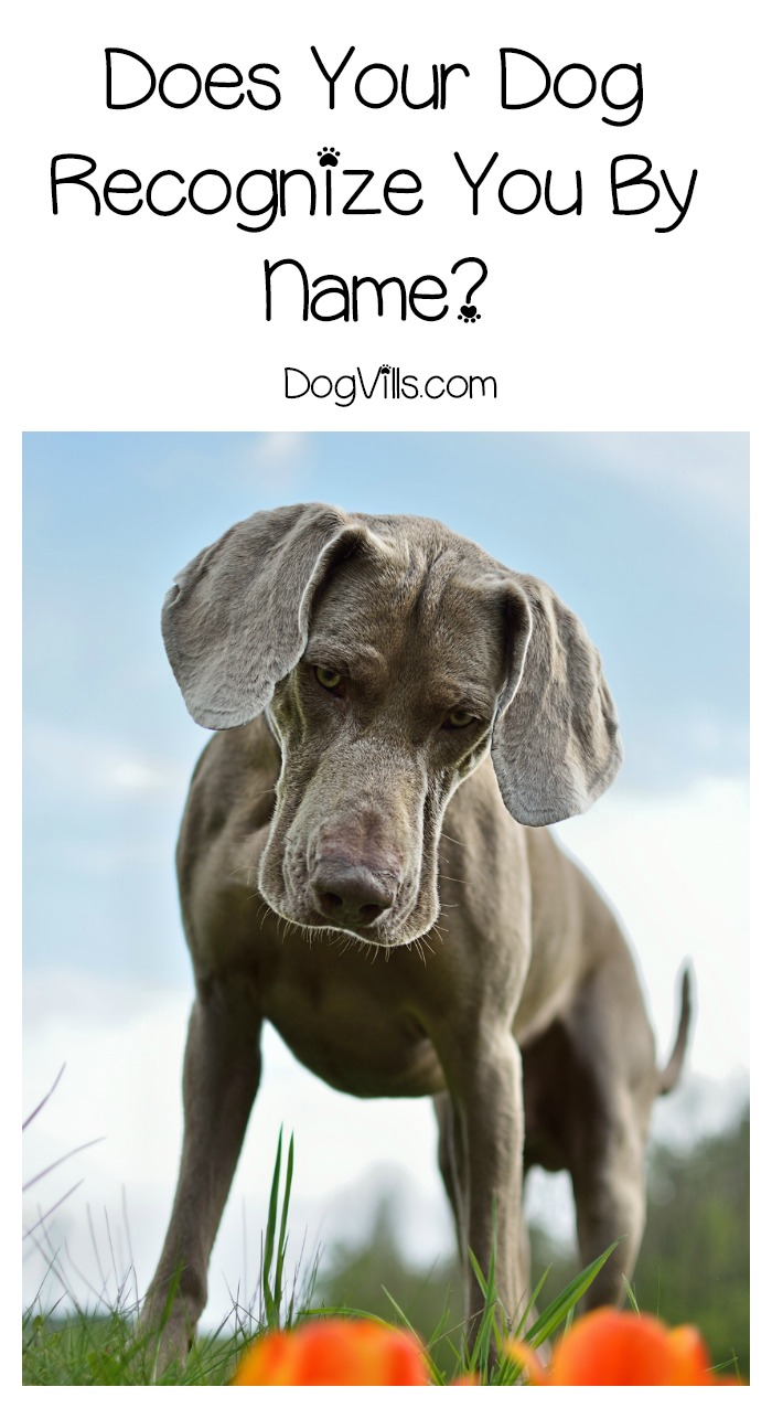 Does Your Dog Recognize You By Name?