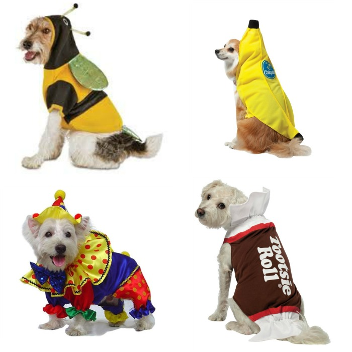 Fido will be the talk of the town on Trick or Treat night with these 12 awesome Halloween costumes for dogs! Includes boys, girls, and unisex. Check them out now!