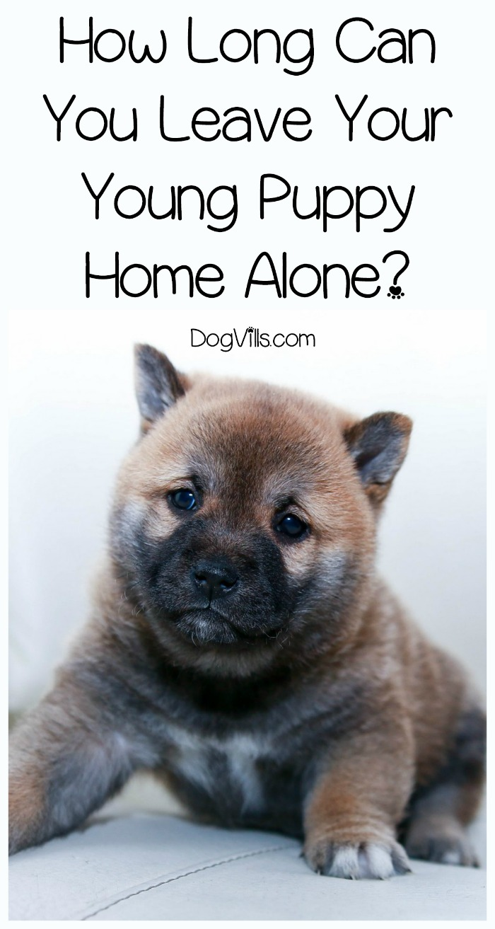 how long can you leave your young puppy home alone dogvills