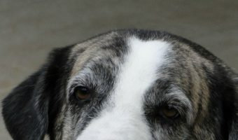 5 Things I Wish You Knew Before Euthanizing Your Dog