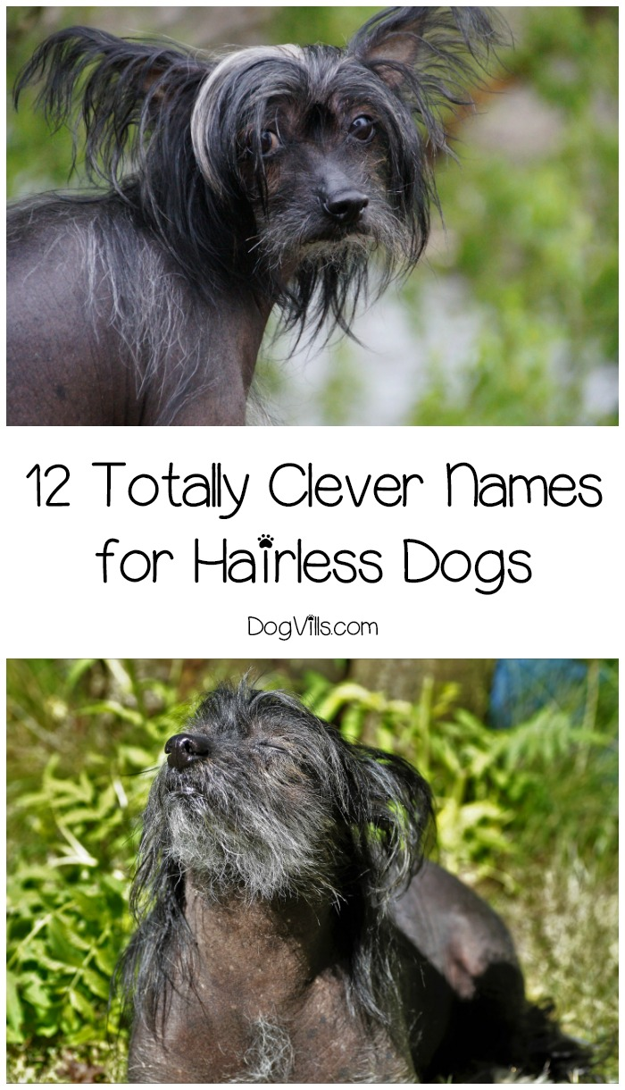 12 Totally Clever Names for Hairless Dogs