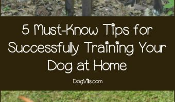 5 Must-Know Tips for Successfully Training Your Dog at Home