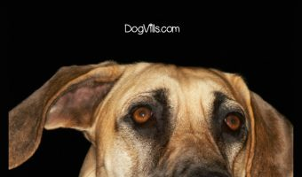 Top 3 Ways for Dealing with Severe Anxiety in Dogs