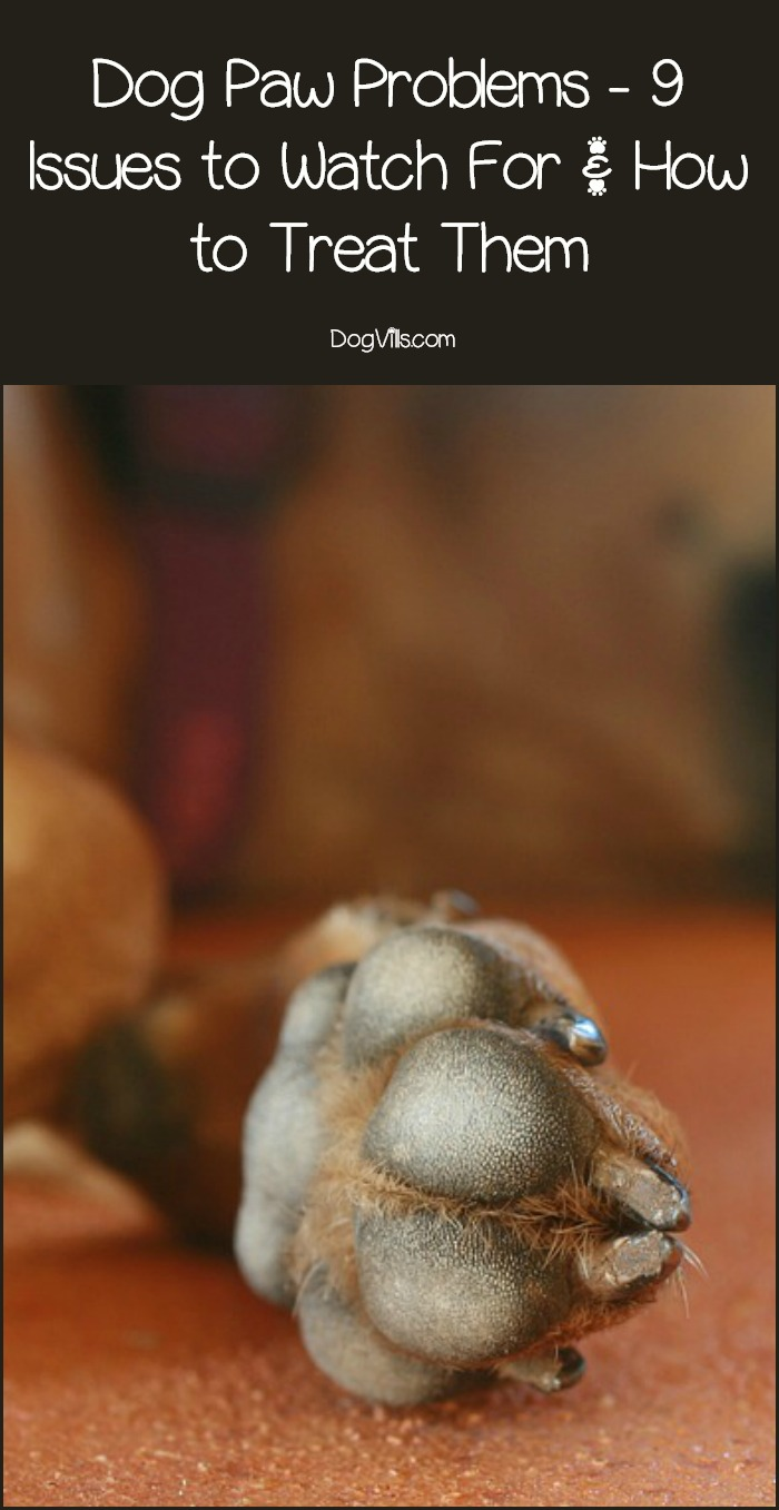 Dog Paw Problems – 9 Issues to Watch For & How to Treat Them