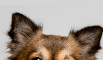 There are several don'ts when it comes to getting your dog's attention. The dont's of getting your dog's attention are just as important as the do's. Find out what they are!