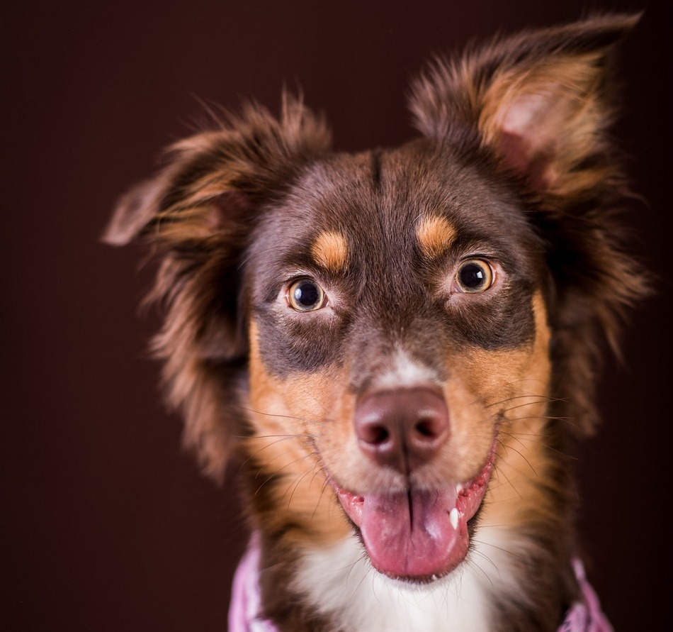 Dog S First Heat Cycle What To Know About The First Heat
