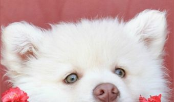 Stop Puppy Biting – 6 Tips to Help Prevent the Love Nips