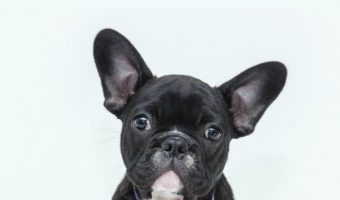 Dog Peeing in the House? Here's 5 Ways to Stop It