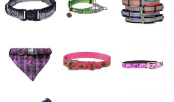 12 Adorable Dog Collars You Need for Your Pup