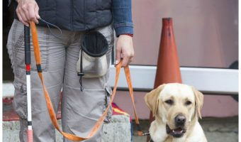 Think you know everything there is to know about service dogs? Think again! Check out these four important facts that may not have occurred to you!
