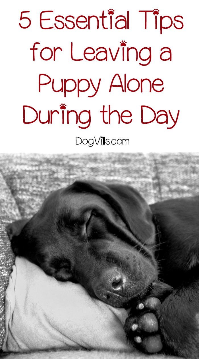 5 Essential Tips for Leaving a Puppy Alone During the Day