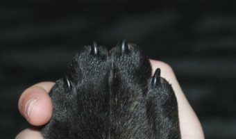 5 Ways to Strengthen Dog Nails to Prevent Cracks and Splits
