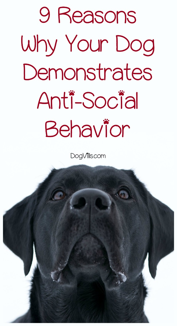 9 Reasons Why Your Dog Demonstrates Anti-Social Behavior