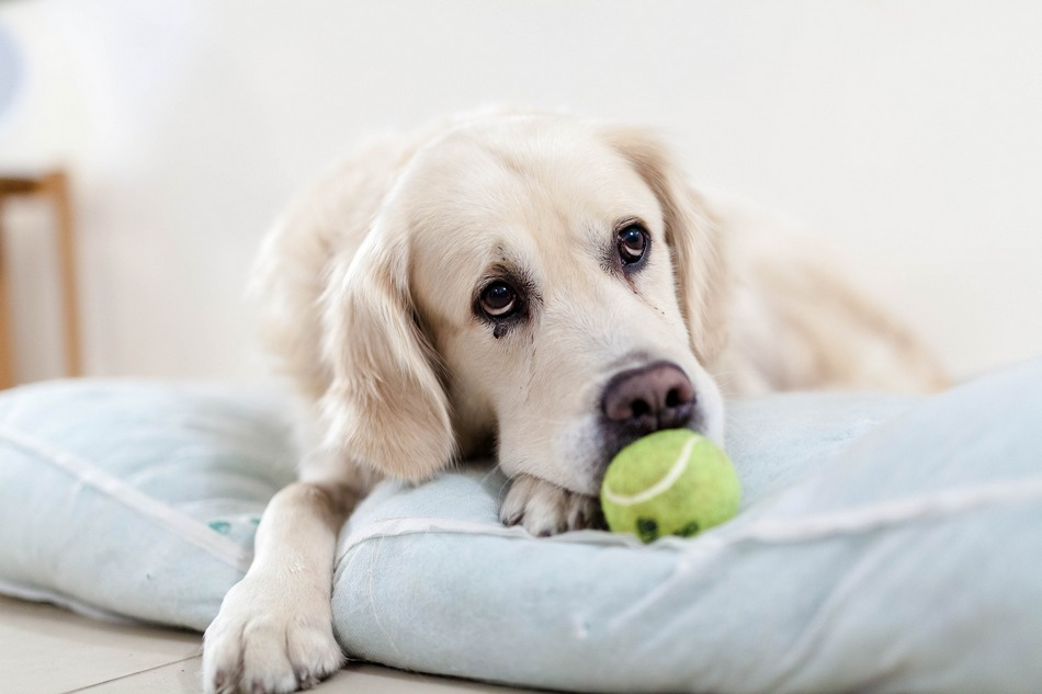 10 Effective Ways To Treat Dog Depression Dogvills