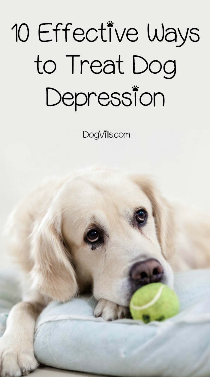10 Effective Ways to Treat Dog Depression