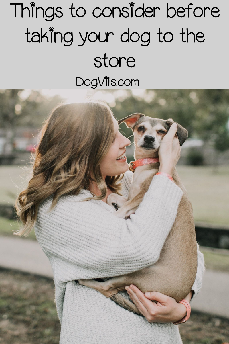 Major Stores That Allow Dogs In The Us Extensive List