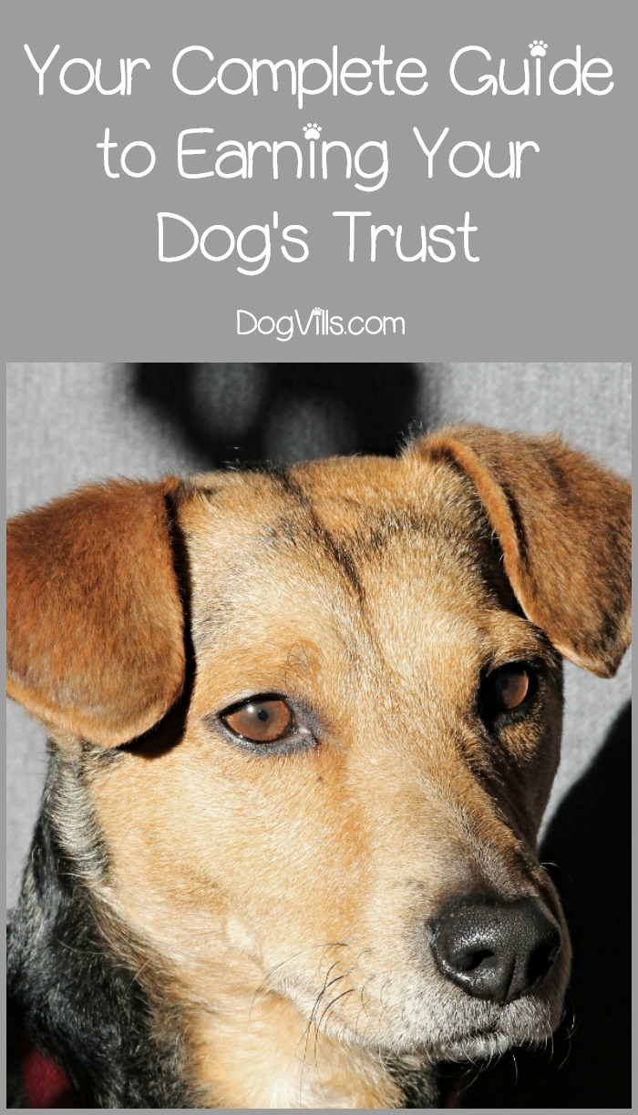 How to Earn a Dog's Trust (Even If They Were Abused or Neglected)