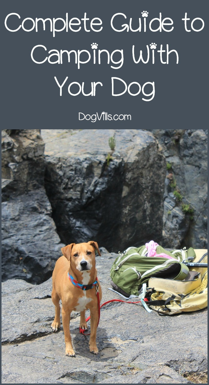 Complete Guide to Taking Your Dog Camping