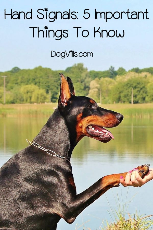 Want to teach your dog hand signals? You must follow these important guidelines before. Then you can use our 8 hand signals dog training techniques