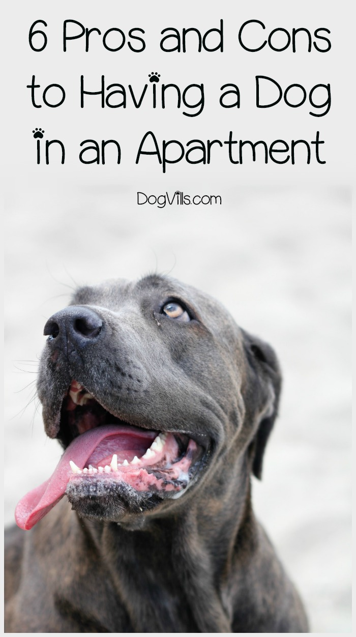 Dogs suited for apartment life latest bestapartment 2018 Pros and cons of living in an apartment