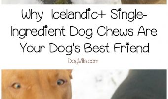 When you have a dog prone to allergies and skin sensitivities, single-ingredient dog chews and treats are your best friend's best friend! Check out our Icelandic+ Dog Chews review to find out why they're our top choice!