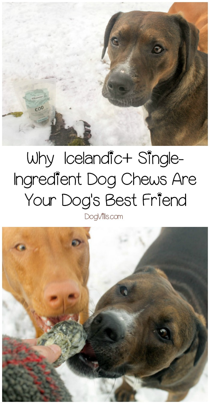 Why Icelandic+ Single-Ingredient Dog Chews Are Your Dog's Best Friend