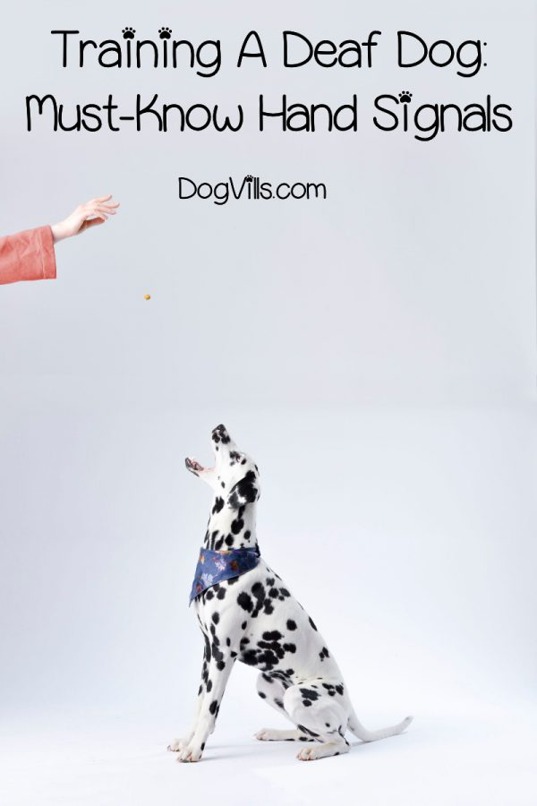 Looking for new dog training tips & tricks? Check out 8 hand signals to teach your deaf dog!