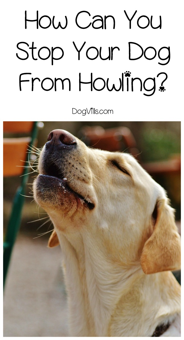 How Can You Stop Your Dog From Howling?