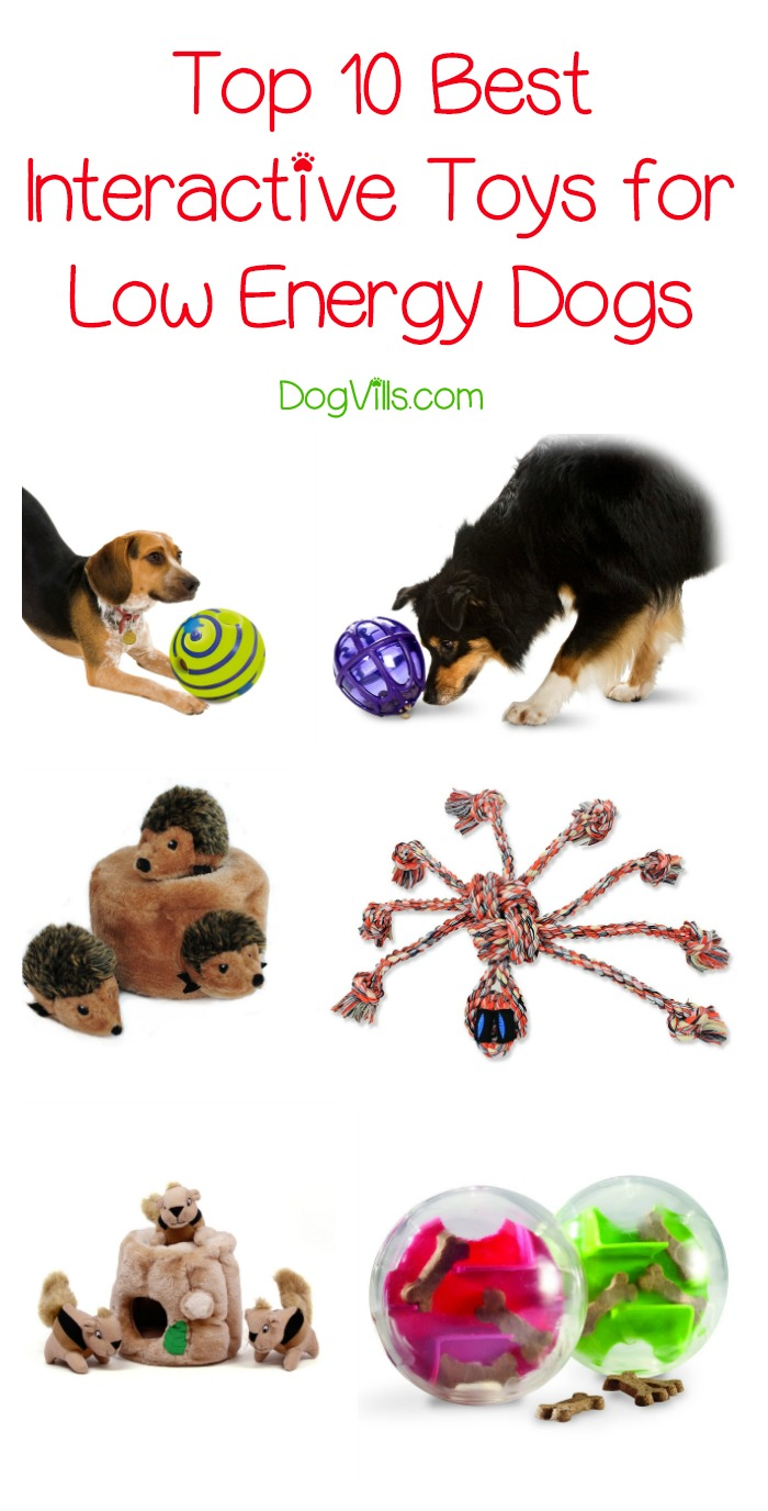 Top 10 Best Interactive Toys for Low Energy Dogs
