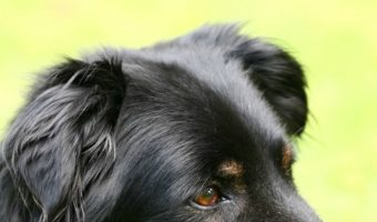 Senior Dogs with Health Conditions – Is Grooming Them Safe?