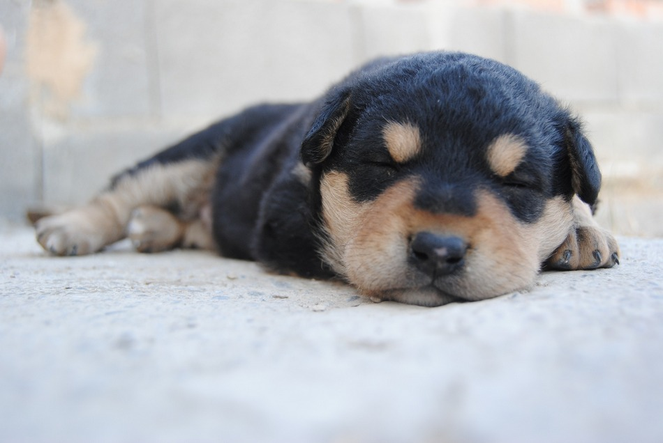 How many hours a day do puppies sleep?