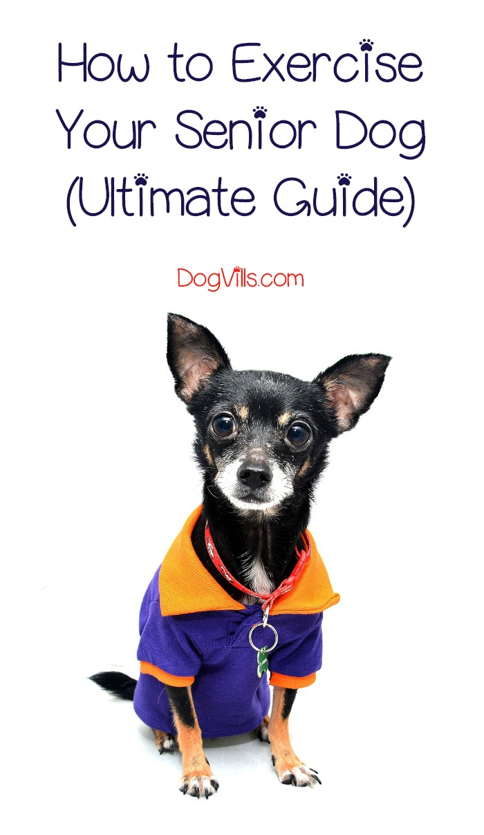 How to Exercise a Senior Dog (Ultimate Guide)