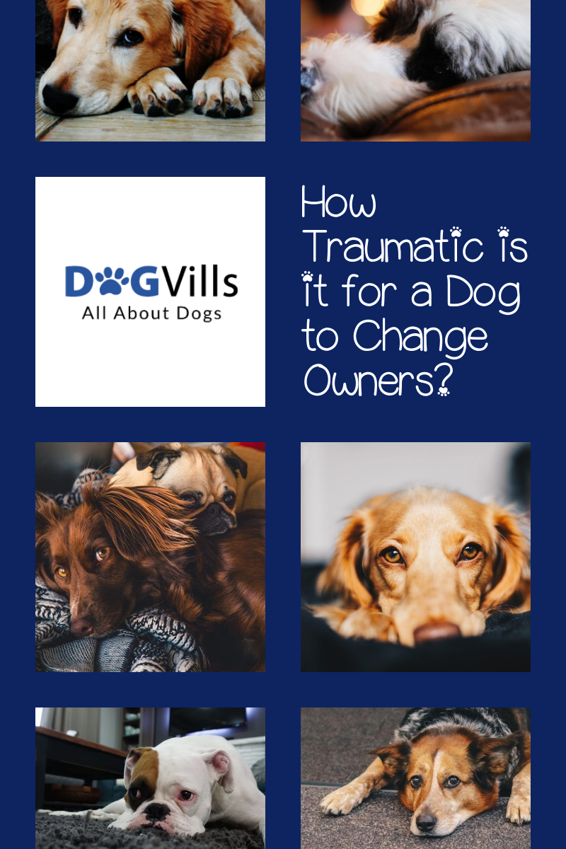 How Traumatic is it for a Dog to Change Owners?