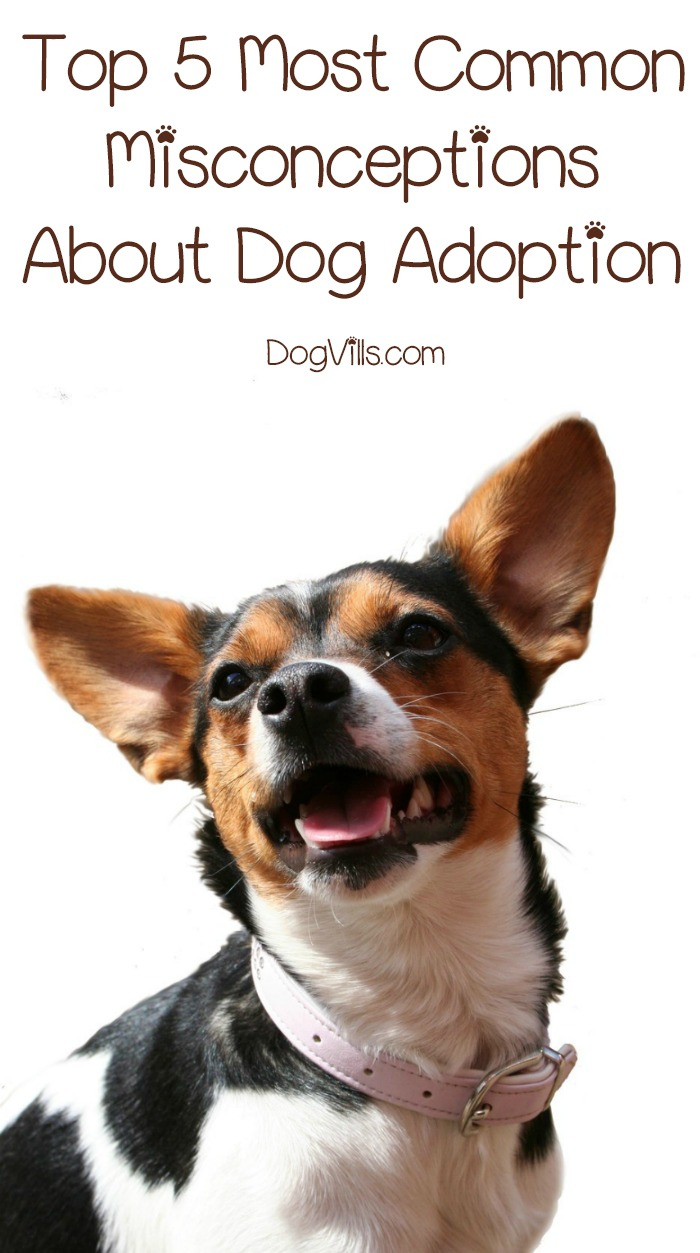 Top 5 Most Common Misconceptions About Dog Adoption