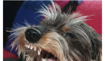 Dog Attacks – How to Avoid and Survive Them