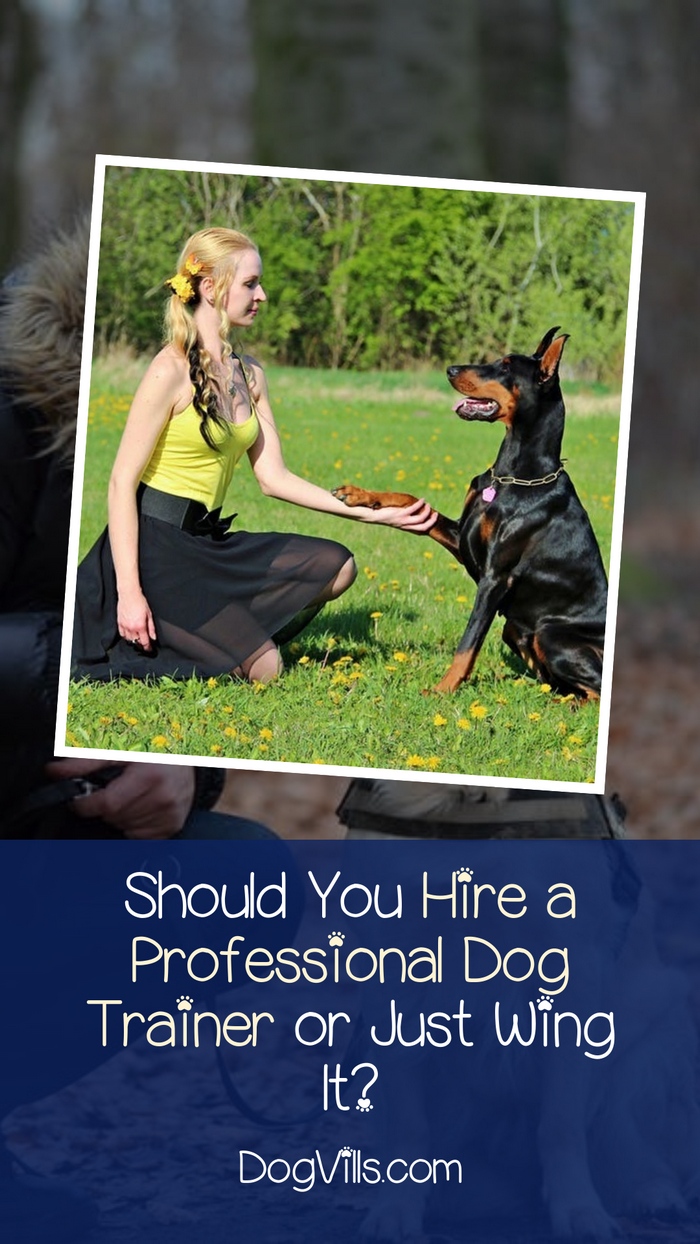 Should You Hire a Pro for Dog Obedience Training or Do It Yourself?