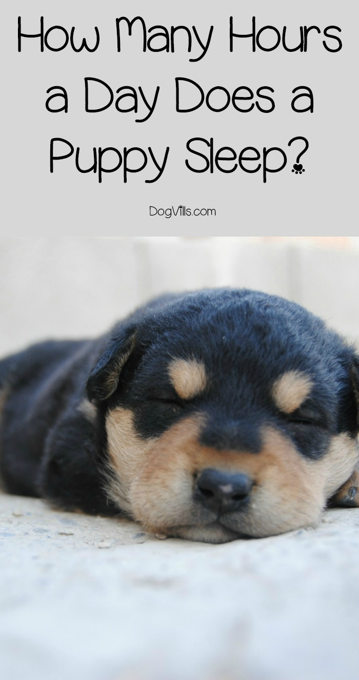 How Many Hours a Day Does a Puppy Sleep?