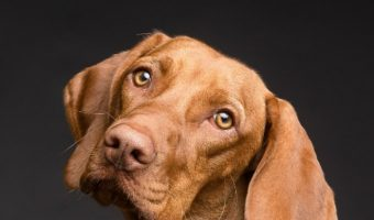 5 Tips for How to Handle a Clingy Dog