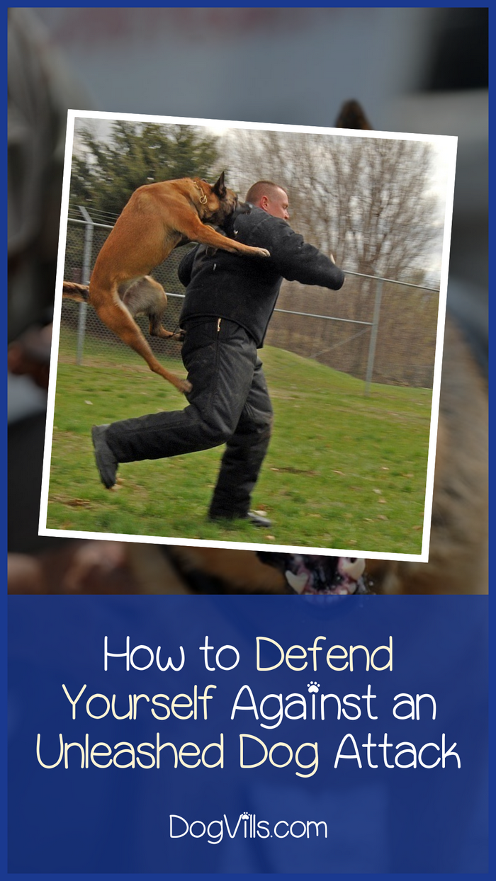 How to Defend Yourself Against an Unleashed Charging Dog?