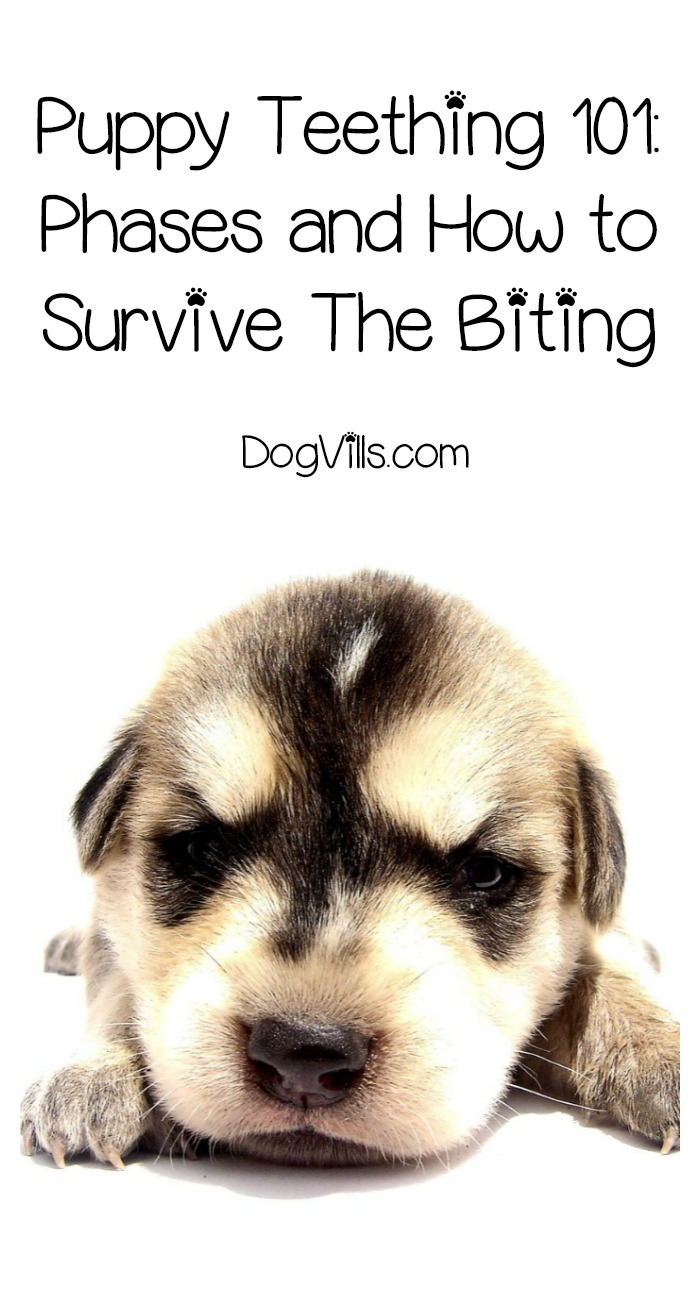 Puppy Teething 101: How To Survive The Biting Stage