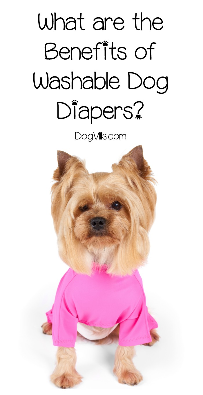 What are the Benefits of Washable Dog Diapers?