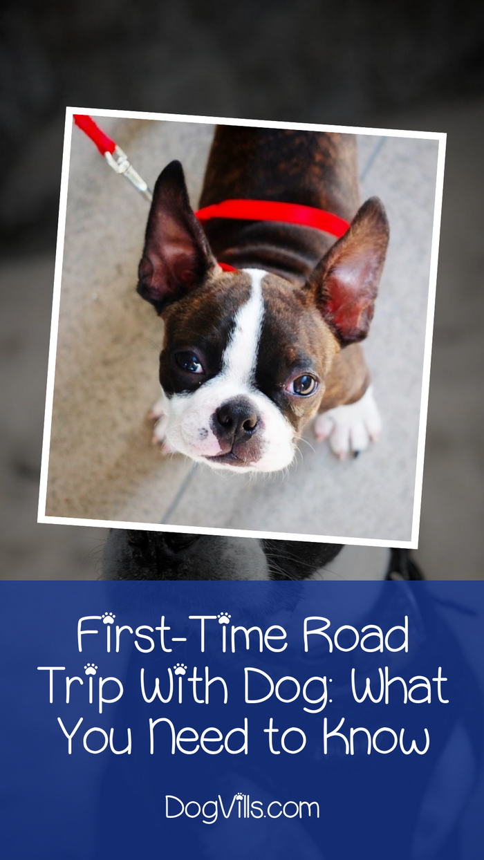 Your Guide to Your First-Time Road Trip with Your Dog