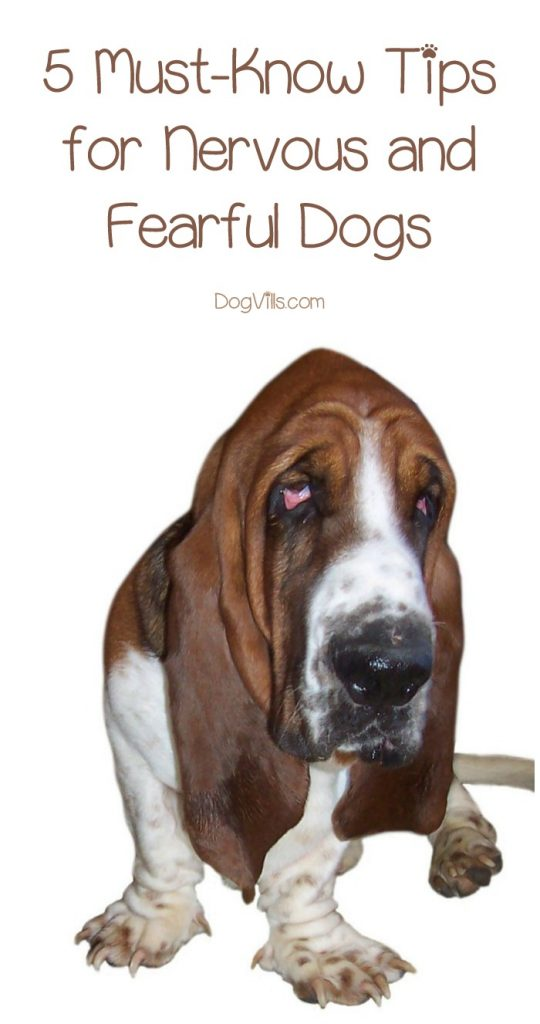 5 Must-Know Tips for Nervous and Fearful Dogs - DogVills