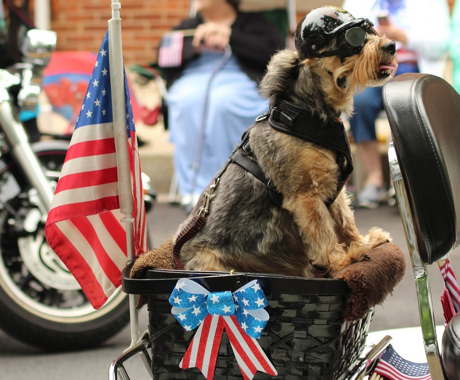 25 Adorable 4th of July and American Themed Dog Names - DogVills