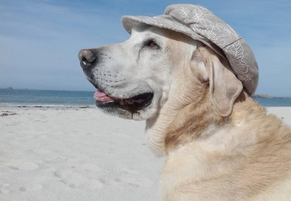 Do you know how to keep your dog safe at the beach? During the hot summer days, there is nothing more refreshing than a trip to the beach for humans and dogs alike. No one wants it to turn into a disaster, though! Check out these 5 safety tips!