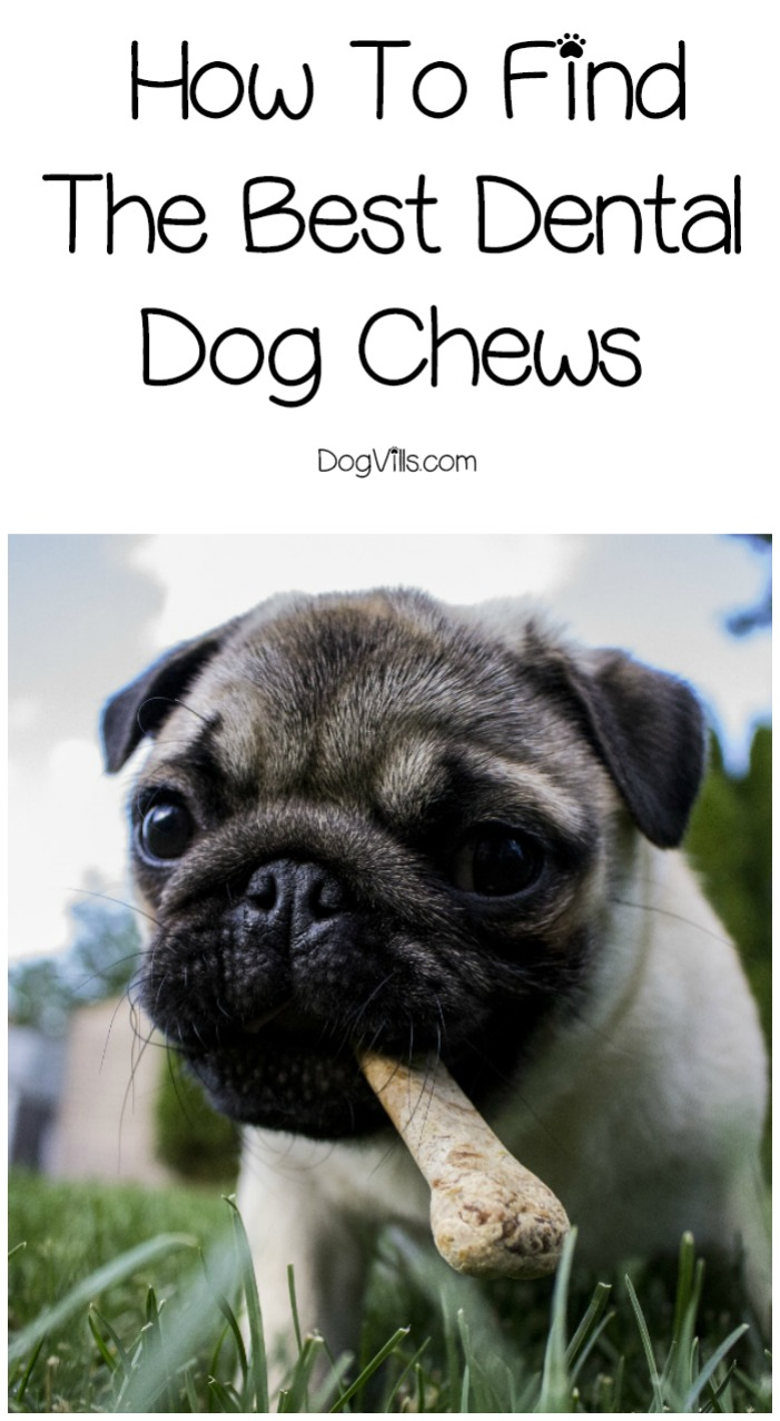 How To Find The Best Dental Dog Chews