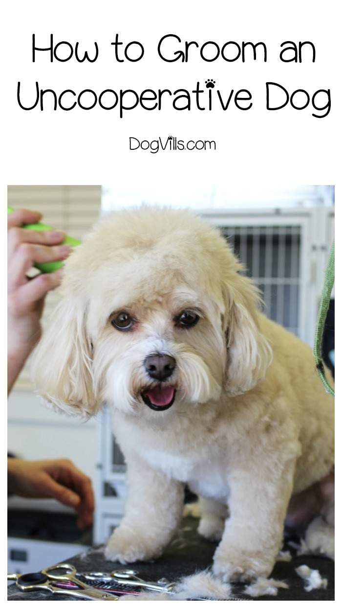 How to Groom an Uncooperative Dog