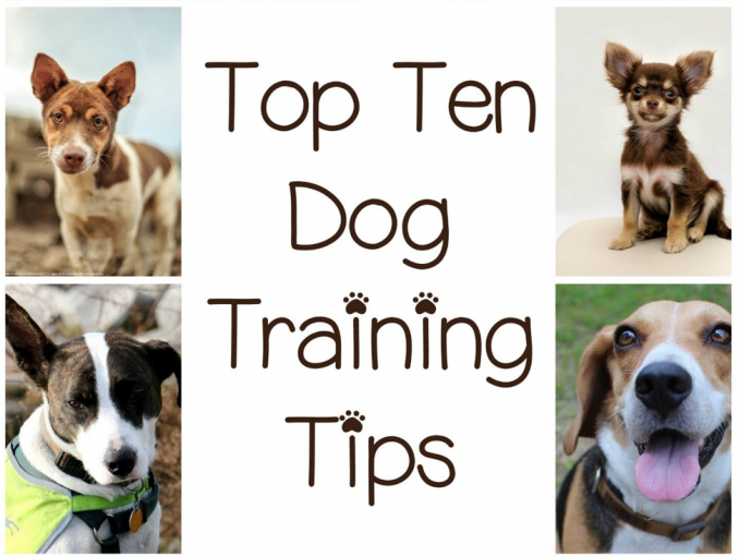 This Ebook Will Help You Get The MOST Out Of Your Dog's Training