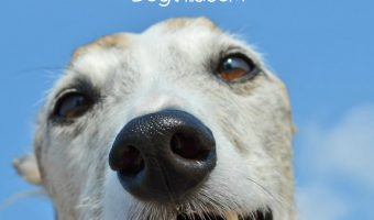 15 Fascinating Facts About Greyhounds