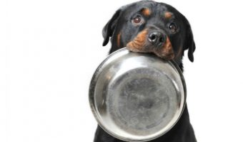 Food Allergies in Dogs: The Definitive Guide
